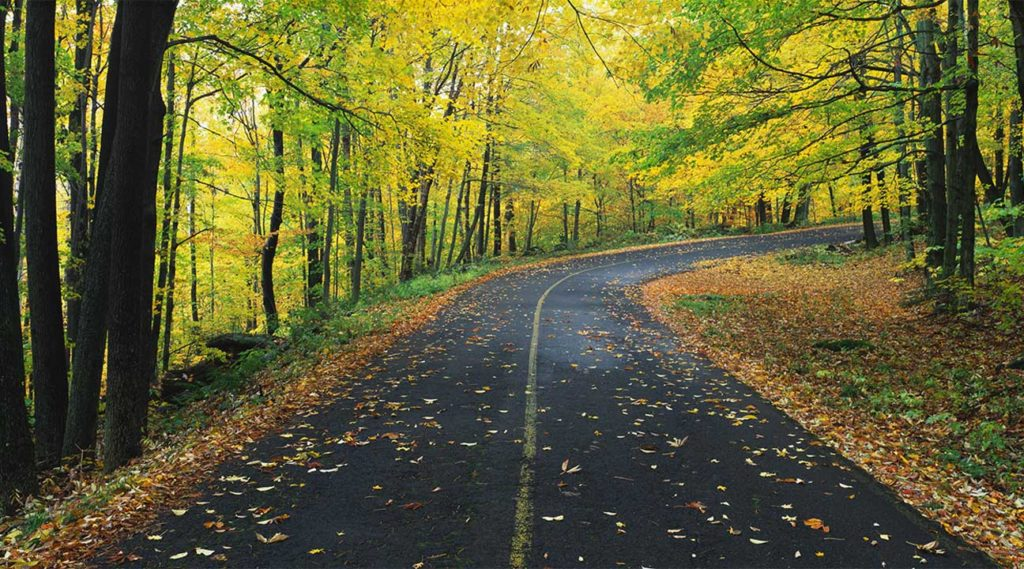 road covered in leaves leading to a drug detox facility in Massachusetts